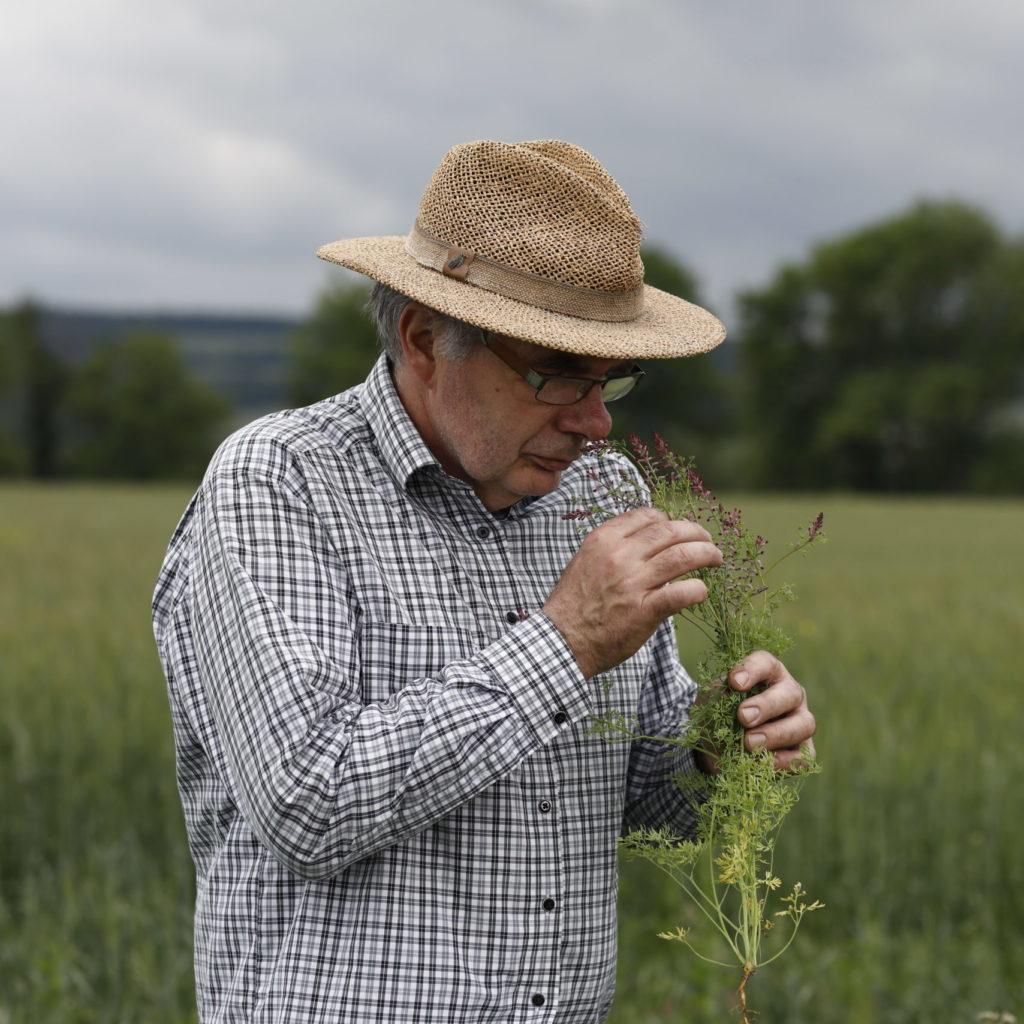Bauer riecht auf Wiese